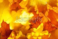 Link toAutumn maple leaf chinese restaurant high definition pictures