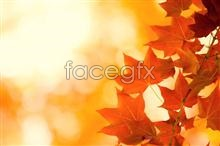 Link toAutumn maple leaf chinese restaurant material picture