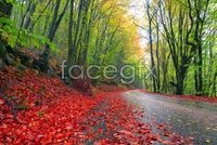 Link toAutumn red maple leaf chinese restaurant deciduous landscape picture
