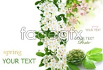 Link toBackground of fresh plants psd