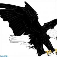Link toBald eagle 00125