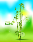Link toBamboo dreams background vector