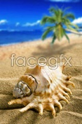 Link toBeach conch pictures psd
