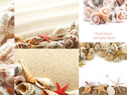 Link toBeach shells hd pictures