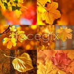 Link toBeautiful autumn leaves 1 psd