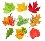 Link toBeautiful autumn leaves 2 psd