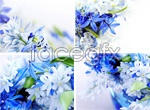 Link toBeautiful blue flowers psd