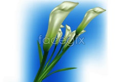 Link toBeautiful budding lily vector