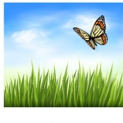 Link toBeautiful butterfly and green grass vector background 03