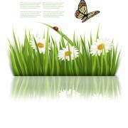 Link toBeautiful butterfly and green grass vector background 04