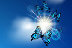 Beautiful butterfly halo background vector