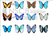 Link toBeautiful butterfly icon