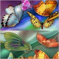 Link toBeautiful butterfly psd