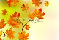 Link toBeautiful cartoon maple leaf chinese restaurant vector background 4