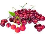 Link toBeautiful cherry vector
