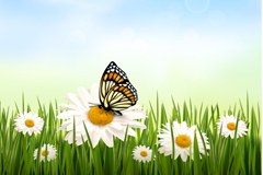 Beautiful daisy butterfly vector