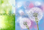 Link toBeautiful dandelion vector