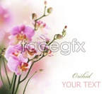 Link toBeautiful flower 02 psd