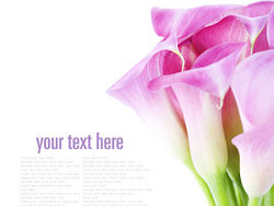 Link toBeautiful flower background 02-hd pictures