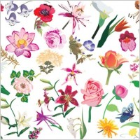 Link toBeautiful flower pattern style 02 vector