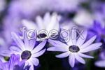 Link toBeautiful flowers 01 psd