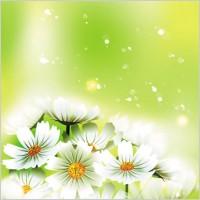 Link toBeautiful flowers 01 vector