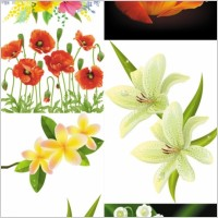 Link toBeautiful flowers flowers vector