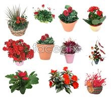 Link toBeautiful flowers potted bonsai psd