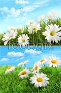 Link toBeautiful grassland scenery psd