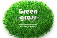 Beautiful green grass background vector
