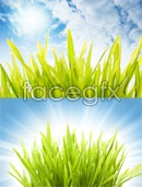 Link toBeautiful green grass psd