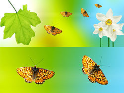 Link toBeautiful green leaf background 03-hd pictures