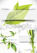 Beautiful green leaf design vector