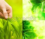 Link toBeautiful green leaves psd
