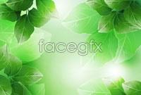 Link toBeautiful green vector