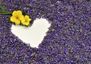 Link toBeautiful heart-shaped lavender background pictures