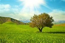 Link topictures landscape Beautiful
