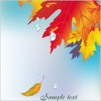 Link toBeautiful maple leaf background 03 vector