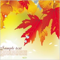 Link toBeautiful maple leaf background 04 vector