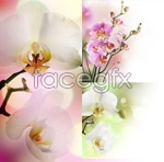 Link toBeautiful orchids psd