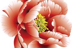 Link toBeautiful peony flowers vector