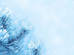Link toBeautiful pine background picture 03