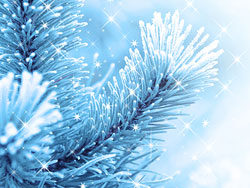 Link toBeautiful pine background picture 05
