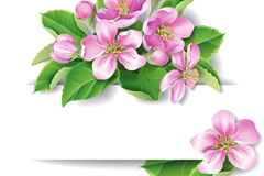 Link toBeautiful pink flowers decorate banner vector