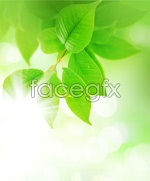 Link toBeautiful plant pictures 03 psd