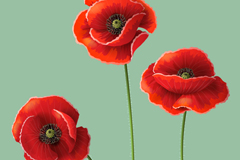 Link toBeautiful poppy background vector