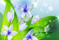 Link toBeautiful purple orchid, vector