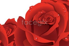 Link toBeautiful real red rose lace vector