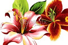 Link tovector lilies and roses realistic Beautiful