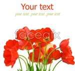 Link toBeautiful red flowers psd